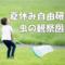 小学生の夏休み自由研究(3年生編)近所の公園の虫の観察図鑑を作成。手順やまとめ方(実例有)