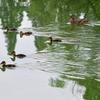 今朝の公園と河川敷
