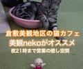 岡山県 倉敷美観地区にある猫カフェ美観neko〜21時まで営業してるオススメ癒しスポット〜