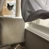 【猫さんと暮らす】猫さんを眺める幸せ