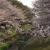 桜を見に行こう