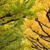 ニコンのカメラと神宮外苑いちょう並木へ(本当はおすすめルートがあったのに)