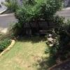 庭の草木にビックリ