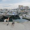 平磯緑地から垂水漁港へ