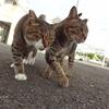 9月前半の #ねこ #cat #猫 その2