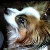 【二次診療】【セカンドオピニオン】愛犬の闘病に大切なことは、タイミングと選択肢です ~これから闘病をなさる方へ~