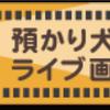 2019年8月14日 午後2時頃 ライブ画像・ライブアニメーション