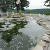 天一宮の池の写真を見て