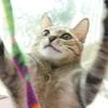正義の味方に変身する猫