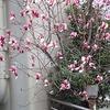 横浜元町『そば処・朱音(あかね)』。(2016.3.12土)