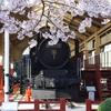桜とD51
