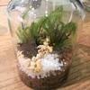【素敵】苔テラリウムとミニ盆栽、苔盆景の比較レビュー<1>~お部屋やデスクにグリーンを~