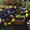 賑やか華やか花たちの姿