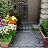 4月の庭 〜わが家の花たち〜