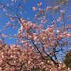 久しぶりに箱根湯本の温泉でちょい休め