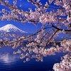大好きな画像を見つけた!富士山と桜のベストショット!!