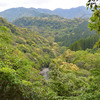 綾の照葉樹林 新緑の色様々