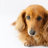 ご主人?それとも仲間?犬は飼い主のことをどう思っているの?