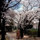 宇治川の桜の下でドミンゴのハンバーガー食べると超ヤバイ