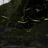 淡路島でホタル見るなら成相ダムのほたる橋!大量の蛍がキレイすぎた