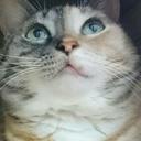 しじみの小部屋~猫との生活のブログ~