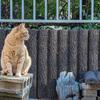 【猫】2021年2月22日の猫の日に写真を上げるだけのブログ【猫の日】