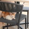 宮古島⑮ ブリーズベイマリーナでねこちゃんが椅子に陣取る