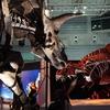 港ヨコハマに恐竜襲来!『恐竜科学博』パシフィコ横浜