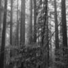 森、モノクロで 3