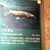 2021/7/11 揚子江の魚IIに新展開!