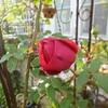 四月の庭の花