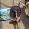 刈り払い機のメンテ くだらないこと Brush cutter maintenance