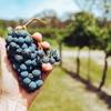 【ワインを知る】生産国によるワインの違い