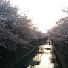 3月31日(土)NHK朝ドラの最終回と、そろそろ見納めの桜。