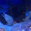 【涼】海の生き物って、不気味なのがいっぱいで楽しい!!「マリンピア日本海」の魚たち♪