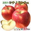 早く採れる【リンゴ】が人気です☺
