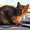 【動画】干潟の家の猫たち