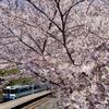 高徳線 オレンジタウン駅の桜