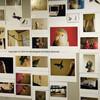 「インコのおとちゃん」写真展 in Tokyo 終了しました。