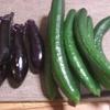 夏野菜、いろいろ