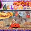 【ハムスター 動画】DIYハロウィンハウス !ハムスターのお家をハロウィーン仕様にしました!Hamster's Halloween House!