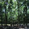 夏だバーベキューだ!大和市「泉の森」で無料のBBQ。食後はカブトムシでも探そう!