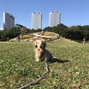 千葉お散歩トレーニング。2019/11/17