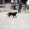 神社で出会ったネコさんは神様の使いなのかもしれない