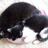 今日の黒猫モモ&白黒猫ナナの動画ー631