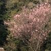 今年初めての山登り、彩都鉢伏山
