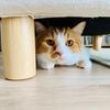 掃除機をかけていたら、愛猫がソファの下からのぞいていました。