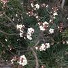 2-318   寒気到来に梅の花…