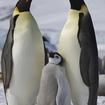 多分みんな知ってると思うけど、ペンギンは南極にしか居ないよ
