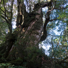 屋久島宮之浦岳縦走記録(1) 登山口まで・からのアクセス:屋久島に着くまでが大変